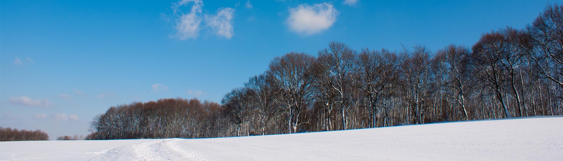 Steinberg Winter