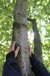 Handbaum