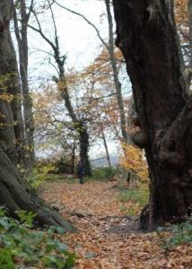 Wald hoch